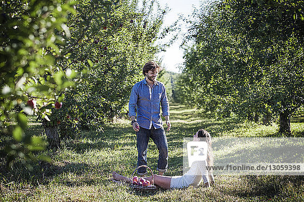 Glücklicher Mann sieht Frau mit Apfelkorb im Obstgarten sitzend an