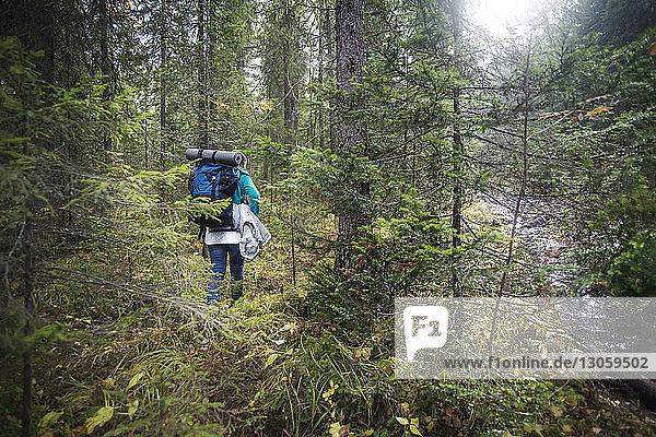 Rückansicht einer Wanderin mit Rucksack beim Spaziergang an Bäumen im Wald
