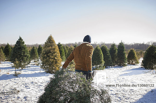 Man carrying Christmas tree on snow covered farm against sky
