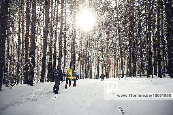 Rückansicht von Freunden beim Spaziergang im verschneiten Wald