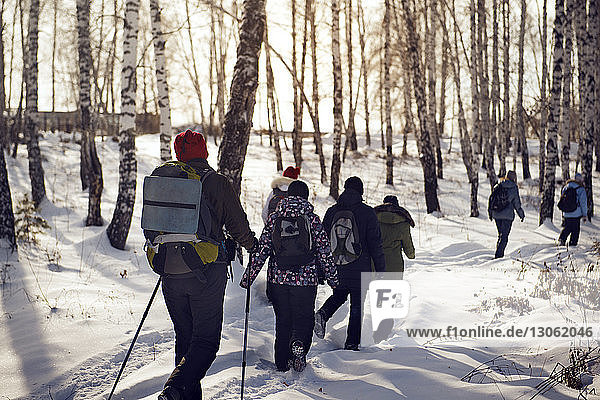 Rear view of hikers waking in snow covered forest