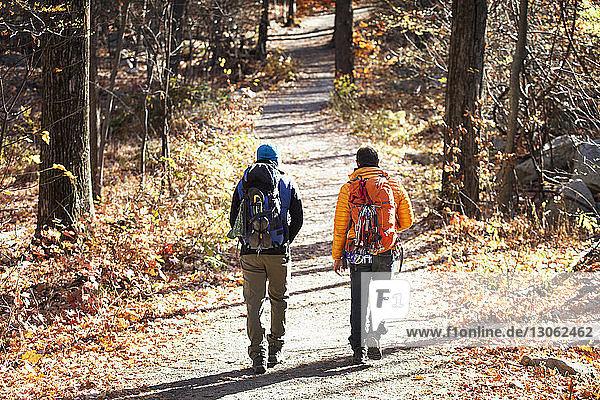 Rückansicht von männlichen Freunden mit Rucksäcken  die im Wald auf der Straße gehen