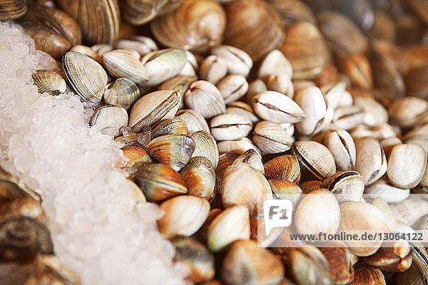 Nahaufnahme von Austern im Restaurant