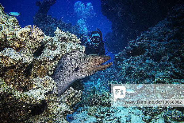 Man scuba diving by moray eel underwater