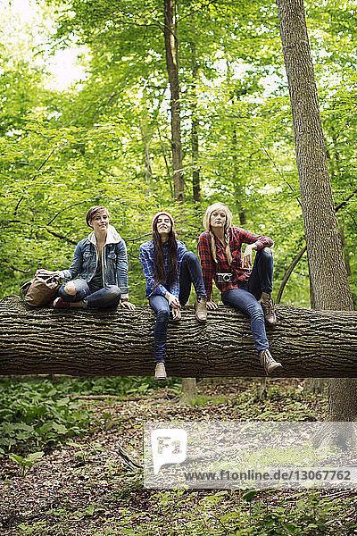 Portrait of friends sitting on tree trunk in forest