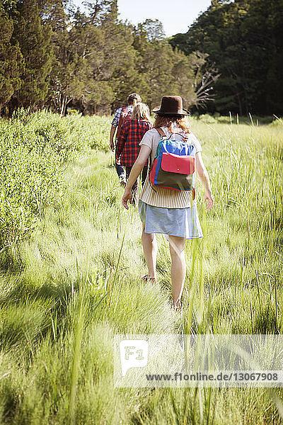 Rückansicht von Freunden  die auf einem Grasfeld im Wald spazieren