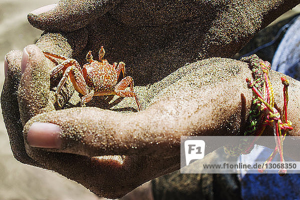 Beschnittenes Bild von Händen  die eine kleine Krabbe halten