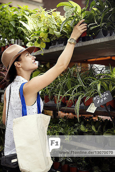 Woman choosing potted plant at flower shop