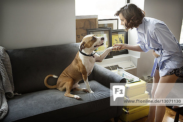 Woman handshaking with dog at home