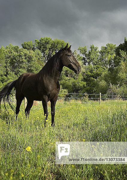Schwarzes Pferd steht auf Grasfeld vor wolkigem Himmel