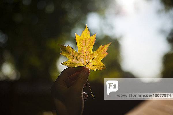Cropped image of girl holding maple leaf