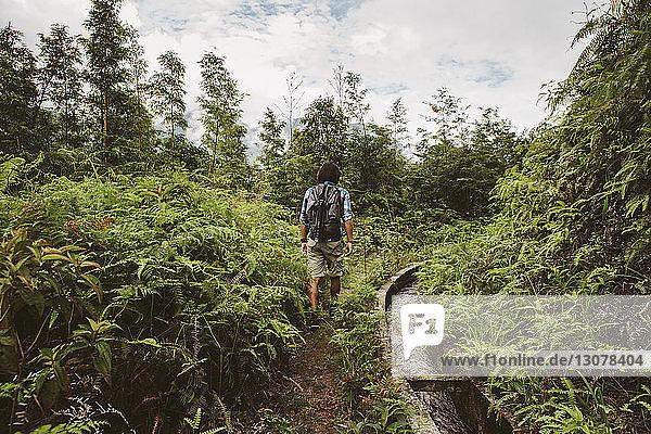 Rückansicht eines Mannes mit Rucksack  der auf einem Feld inmitten von Pflanzen geht