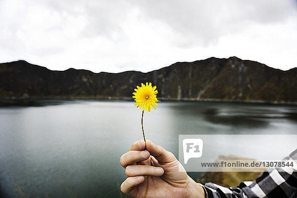 Cropped image of woman holding dandelion against lake and mountains