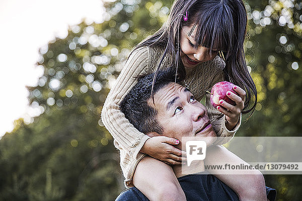 Girl sitting on father's shoulder in orchard