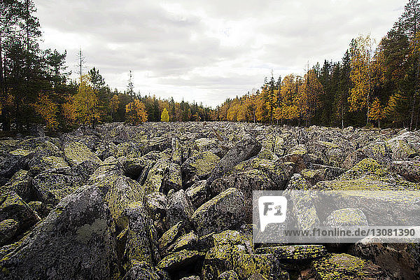 Rocks on field by trees against cloudy sky during autumn