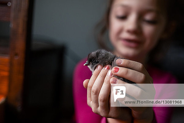 Smiling girl holding baby chicken while sitting at home