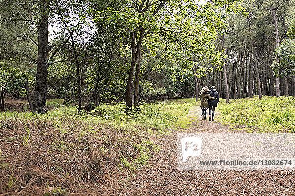 Rückansicht eines Paares beim Waldspaziergang