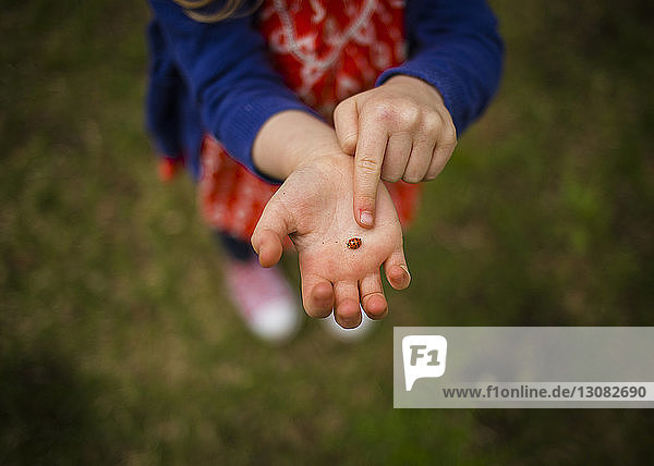 Low section of girl holding ladybug while standing on field