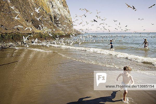 Three boys running from seagulls