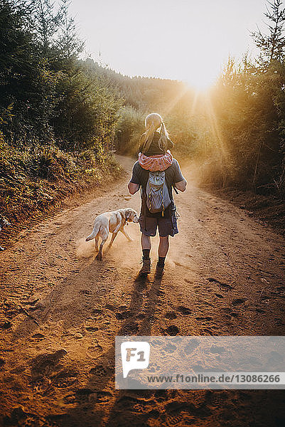 Rear view of father carrying daughter on shoulders while walking with dog on dirt road during sunny day