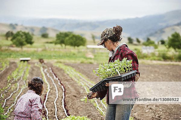 Female farmers working on field