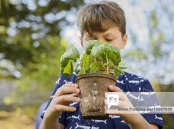 Boy holding potted plant while gardening at backyard