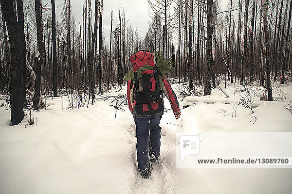Rear view of hiker carrying backpack while walking in snow covered forest