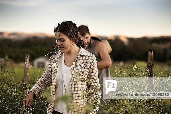 Bauern und Bäuerinnen bei der Feldarbeit