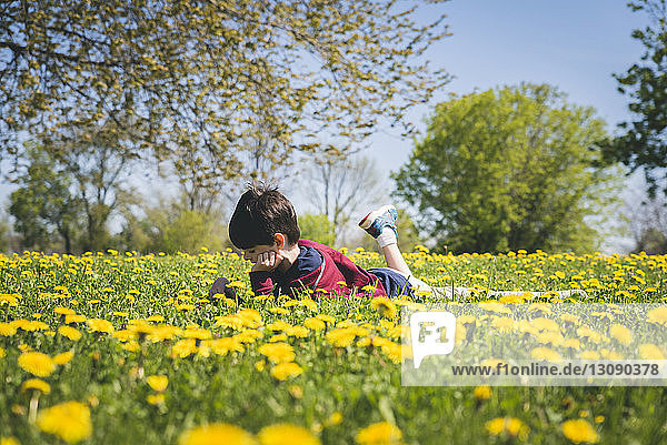 Side view of boy lying amidst yellow flowering plants on field at park during sunny day