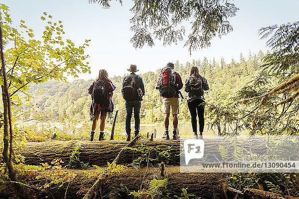 Rear view of friends standing on fallen tree trunk in forest