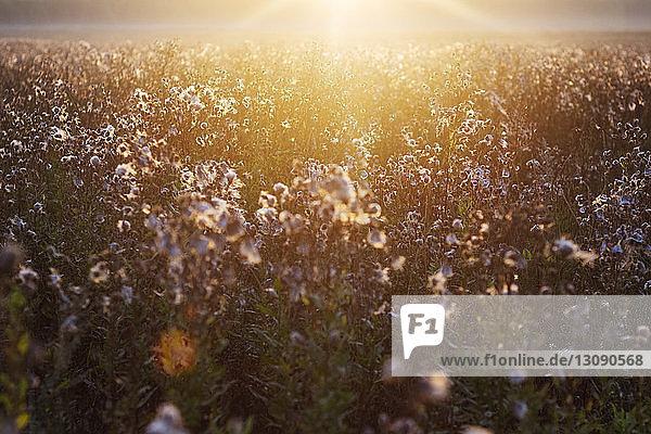 Hochwinkelansicht von Pflanzen  die an sonnigen Tagen auf dem Feld wachsen