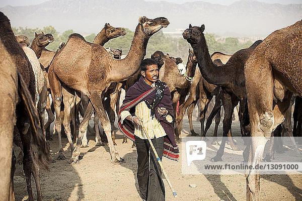 In eine Decke gewickelter Mann läuft in Pushkar Fair gegen Kamele auf Sand