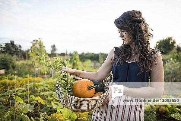 Frau schaut Gemüse an  während sie es im Korb im Gemeinschaftsgarten trägt Frau schaut Gemüse an, während sie es im Korb im Gemeinschaftsgarten trägt