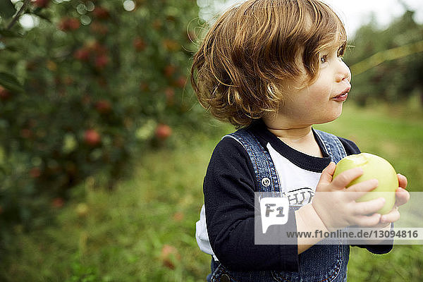 Baby boy holding apple looking away while standing at orchard