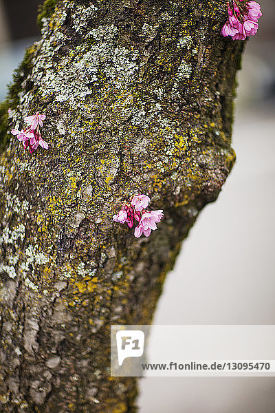 Flowers on moss covered tree trunk