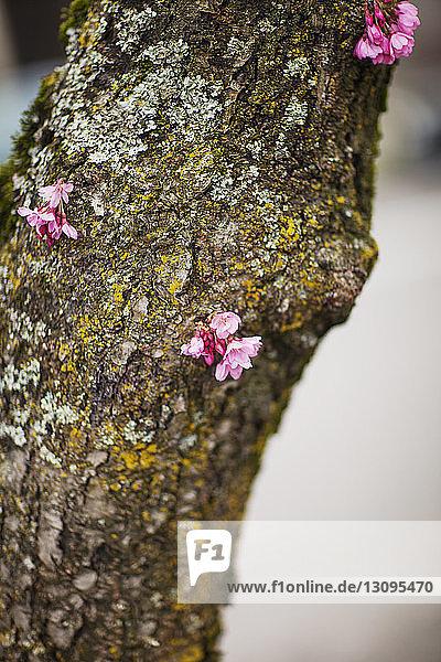 Blumen auf moosbedecktem Baumstamm