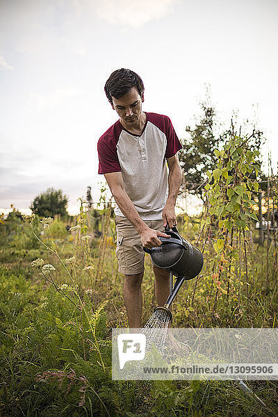Mann gießt Pflanzen  während er im Gemeinschaftsgarten steht Mann gießt Pflanzen, während er im Gemeinschaftsgarten steht