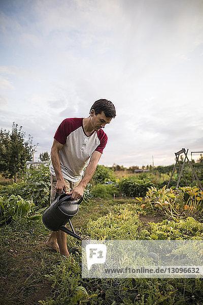 Mann gießt Pflanzen im Gemeinschaftsgarten gegen den Himmel Mann gießt Pflanzen im Gemeinschaftsgarten gegen den Himmel