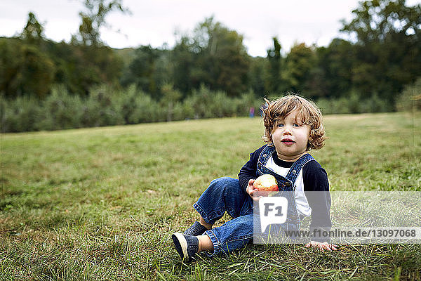 Portrait of baby boy holding apple while sitting on grassy field at orchard