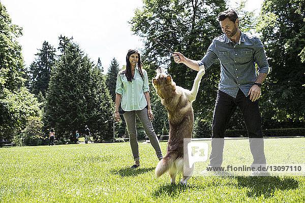 Glückliches Paar spielt mit Hund auf Grasfeld im Park