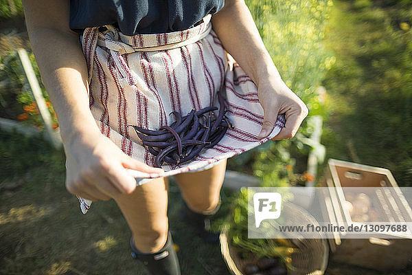 Mitschnitt einer Frau  die Bohnen in Textilien hält  während sie im Gemeinschaftsgarten steht Mitschnitt einer Frau, die Bohnen in Textilien hält, während sie im Gemeinschaftsgarten steht