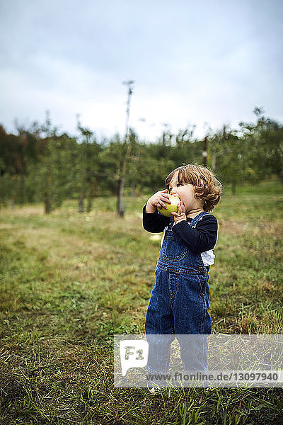 Baby boy eating apple while standing on grassy field at orchard