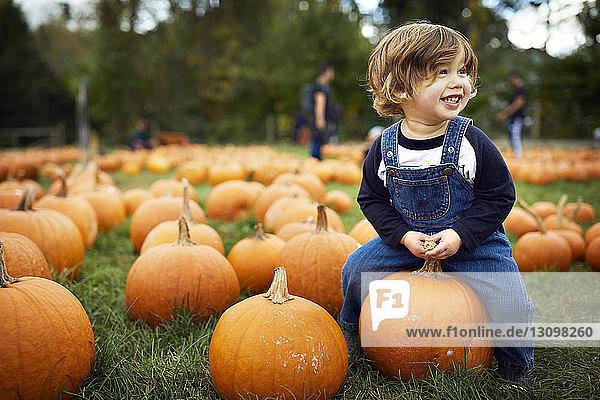 Smiling baby boy sitting on pumpkin at farm