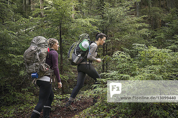 Low angle view of women hiking amidst trees in forest
