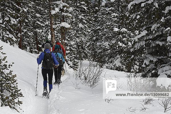 Rückansicht von Wanderern  die in schneebedecktem Wald wandern