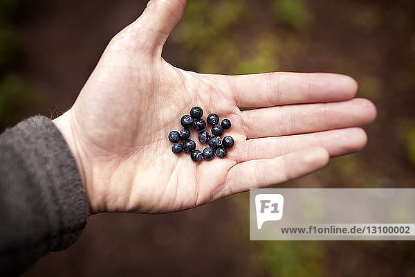 Cropped image of hand holding blueberries