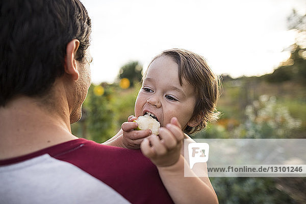 Sohn isst Obst  während er vom Vater im Gemeinschaftsgarten getragen wird Sohn isst Obst, während er vom Vater im Gemeinschaftsgarten getragen wird