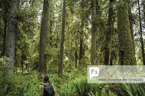 Rückansicht eines Mannes  der im Wald an Bäumen steht