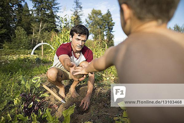 Vater gibt dem hemdlosen Sohn Gemüse  während er im Gemeinschaftsgarten kauert Vater gibt dem hemdlosen Sohn Gemüse, während er im Gemeinschaftsgarten kauert