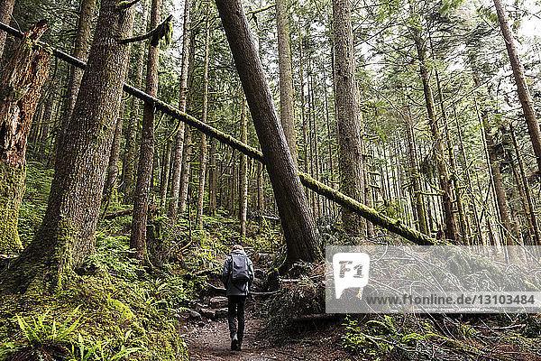 Rückansicht eines Wanderers  der auf einem Pfad inmitten von Bäumen im Wald geht